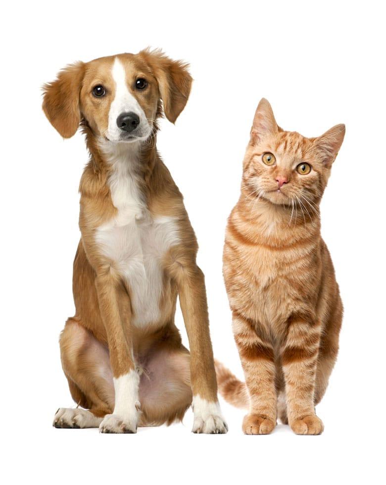 dog and cat in South Carolina