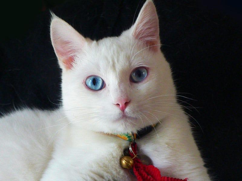 cat pet insurance