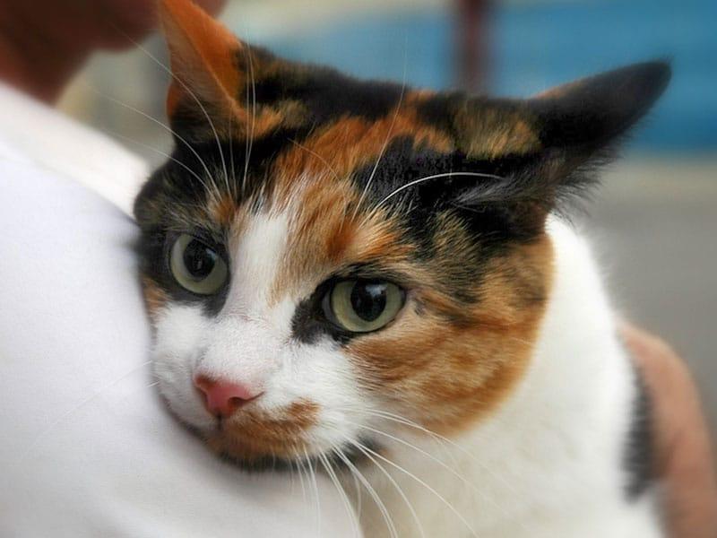 cat at the vet in SC