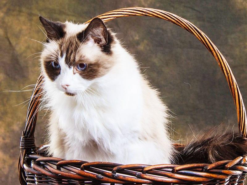 cute cat with pet insurance in South Carolina