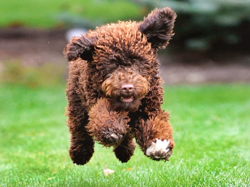 jumping for joy because of pet insurance