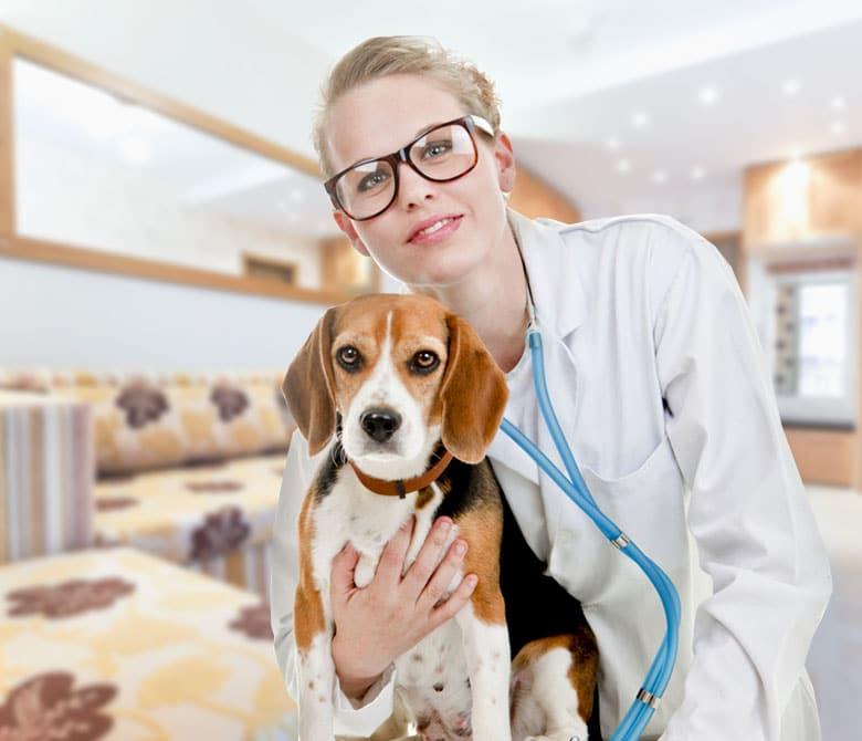 Pet Illness Coverage in South Carolina